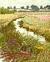 Landcape Artwork - Jan Dingle - Summer Meadows